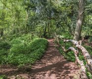 El árbol de la bobina alineó la trayectoria de la suciedad a través de un bosque en Inglaterra Reino Unido en un día de primavera Fotos de archivo libres de regalías