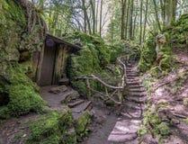 El árbol de la bobina alineó la trayectoria de la suciedad a través de un bosque en Inglaterra Reino Unido en un día de primavera Foto de archivo libre de regalías