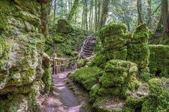 El árbol de la bobina alineó la trayectoria de la suciedad a través de un bosque en Inglaterra Reino Unido en un día de primavera Imágenes de archivo libres de regalías