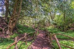 El árbol de la bobina alineó la trayectoria de la suciedad a través de un bosque en Inglaterra Reino Unido en un día de primavera Imagen de archivo libre de regalías