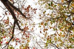 El árbol de la parte inferior a la visión superior como imagen aislada foto de archivo libre de regalías