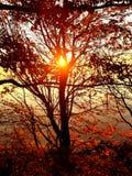El árbol de la puesta del sol en el wa de Bellingham elimina la tensión imagen de archivo libre de regalías