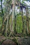El árbol de la raíz fotografía de archivo libre de regalías