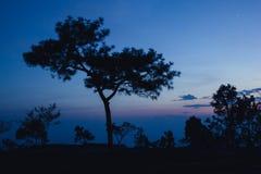 El árbol de la silueta fotos de archivo libres de regalías
