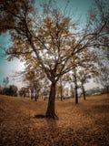 El arbol de la vida. El árbol de la vida Royalty Free Stock Photos