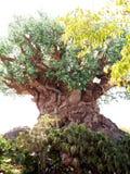 El árbol de la vida en el parque del reino animal Imagen de archivo