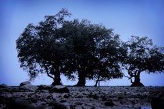 El árbol de los tríos Foto de archivo