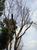 El árbol de muertos imagen de archivo libre de regalías