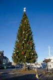 El árbol de navidad de Kinnevik en Estocolmo Imágenes de archivo libres de regalías