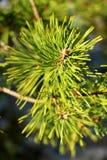 El árbol de navidad es bueno en luz brillante, pero ella es una señora de la media luz imagenes de archivo