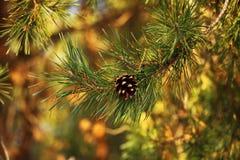 El árbol de navidad es bueno en luz brillante, pero ella es una señora de la media luz fotografía de archivo
