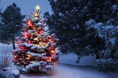 El árbol de navidad nevado brilla intensamente brillantemente en la luz de la madrugada Imagen de archivo