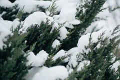 El árbol de navidad, pino cubierto con la nieve, Año Nuevo, invierno es tiempo Fotos de archivo libres de regalías