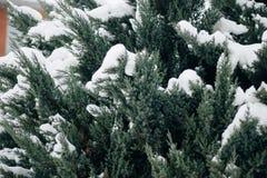 El árbol de navidad, pino cubierto con la nieve, Año Nuevo, invierno es tiempo Imagen de archivo libre de regalías