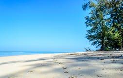 El árbol de pino continúa al fondo de la playa y del cielo azul Imagenes de archivo