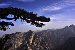 El árbol de pino y la montaña Imágenes de archivo libres de regalías