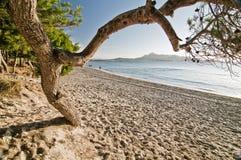 El árbol de pino y la playa en salida del sol se encienden Fotografía de archivo