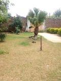 El árbol de tamiza con las plantas verdes imagen de archivo