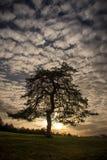 El árbol de tentaciones imagenes de archivo