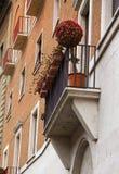 El árbol decorativo con las flores rojas está permaneciendo en balcón en Roma Foto de archivo libre de regalías