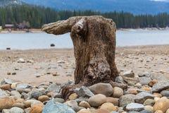 El árbol del águila Fotografía de archivo libre de regalías