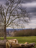El árbol del corte abre una sesión un parque fotos de archivo libres de regalías