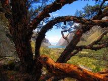El árbol del cuento de hadas Imagenes de archivo