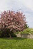 El árbol del flor Imagenes de archivo