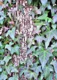 El árbol del headend Imagen de archivo libre de regalías