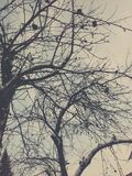 El árbol del invierno fotografía de archivo libre de regalías