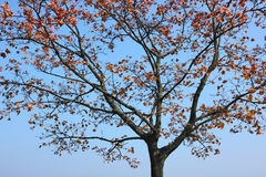 El árbol del otoño Fotografía de archivo