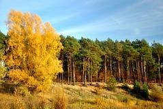 El árbol del otoño Imagen de archivo