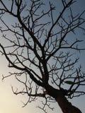El árbol del otoño Fotos de archivo