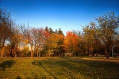El árbol del otoño con amarillo se va en el parque imagenes de archivo