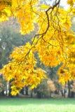 El árbol del otoño con amarillo se va en el parque fotos de archivo