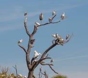 El árbol del pájaro Foto de archivo libre de regalías