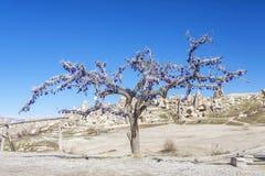 El árbol delante de las montañas de Capadocia Imagen de archivo