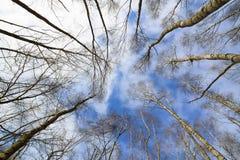 Coronas deshojadas del árbol Fotografía de archivo