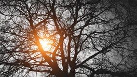 El árbol detrás del sol en un fondo negro Imagenes de archivo