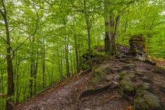 El árbol en bosque Imagenes de archivo