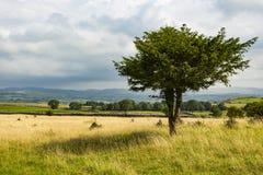 El árbol en Cunswick cayó foto de archivo libre de regalías
