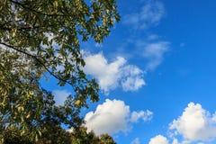 El árbol en el cielo azul y el blanco se nubla el fondo Fotografía de archivo