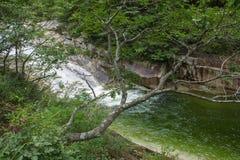 El árbol en el fondo de un río de la montaña Foto de archivo libre de regalías