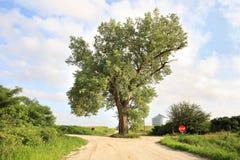 El árbol en el medio del camino Foto de archivo libre de regalías