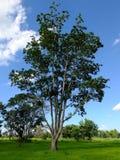 El árbol en la granja Fotos de archivo
