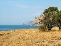 El árbol en la orilla del Mar Negro Imagen de archivo