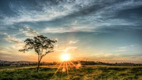 El árbol en la puesta del sol foto de archivo libre de regalías