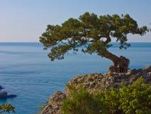 El árbol en la roca Fotografía de archivo libre de regalías