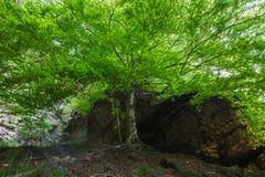 El árbol en la roca Fotos de archivo