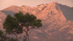 El árbol en la roca en rojo de la puesta del sol de Montenegro se nubla el cielo hermoso metrajes